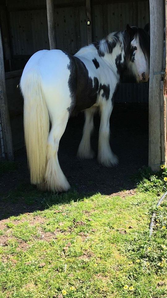 https://gallopinggoop.ccvshop.nl/Files/8/132000/132210/FileBrowser/1/15.4.jpg