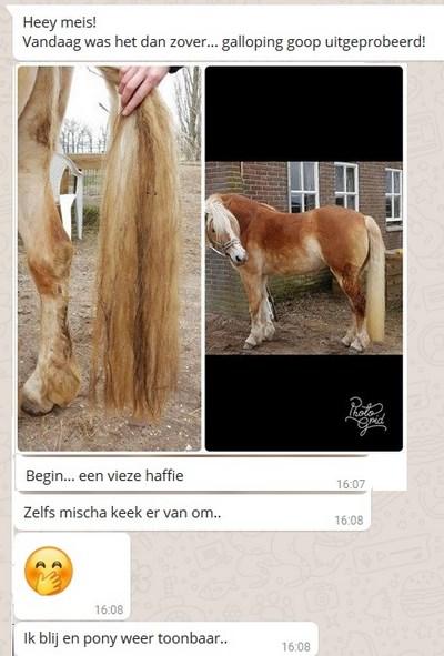 https://gallopinggoop.ccvshop.nl/Files/8/132000/132210/FileBrowser/2/gg10-kopie-.jpg